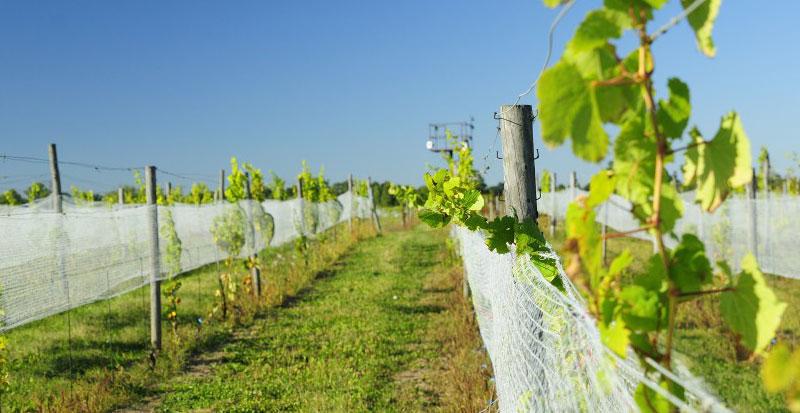 Winnice Dolny Śląsk