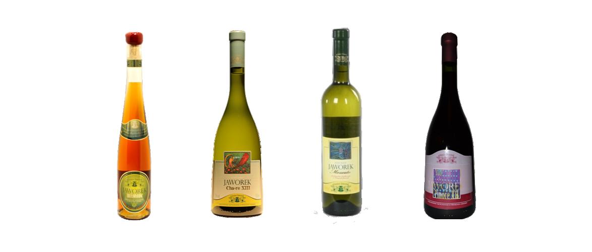 wina-jaworek-2014