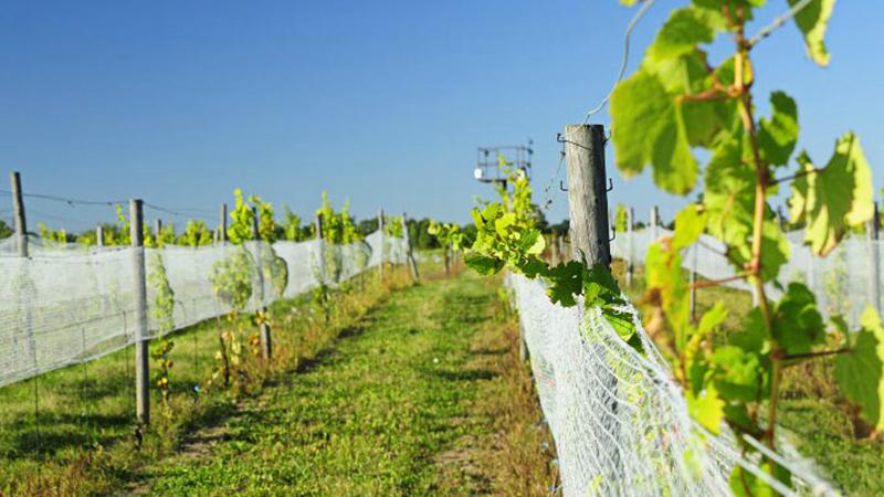 Winnice Jaworek, Dolny Śląsk, polskie wino